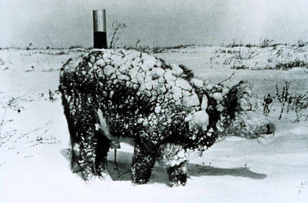 historic frozen cow