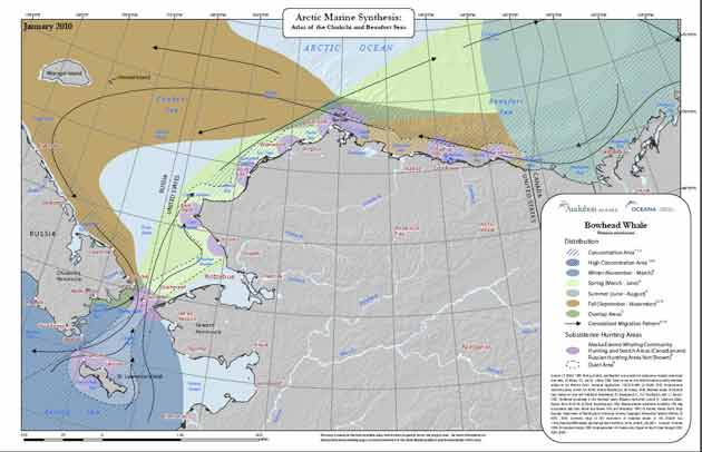 Map of figure-8 bowhead whale migration. Courtesy of Melanie Smith, Arctic Ocean Atlas
