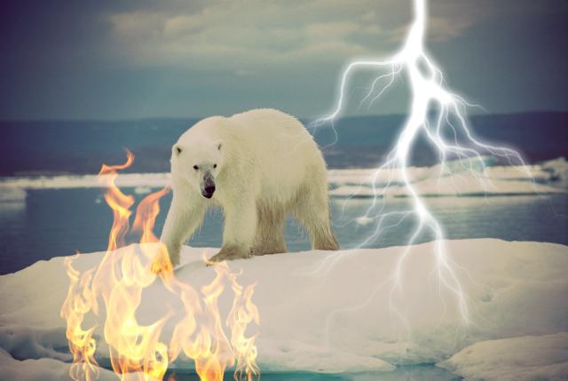 polar bear photo: Ansgar Walk via Wikimedia Commons